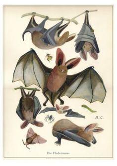Halloween Images, Halloween Bats, Bat Dog, Bat Animal, Bat Flying, Cute Bat, Drawing Exercises, Vampire Bat, Gulls