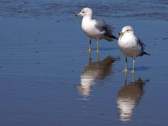 Image from http://www.public-domain-photos.com/free-stock-photos-4-big/animals/seagulls-and-beach.jpg.