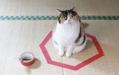cat sitting in a tape circle trap