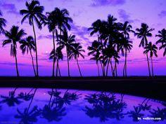 Palm Beach Night View - Beaches Wallpaper ID 27833 - Desktop Nexus Nature