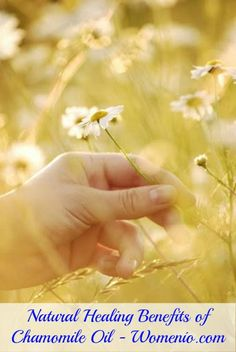 DIY HEALTH - Natural Healing Benefits of Chamomile Oil - Top 15 Aromatherapy Oils and Their Therapeutic Benefits