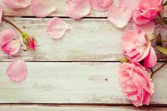 Pink Rose Wallpaper 1080p ~ Monodomo