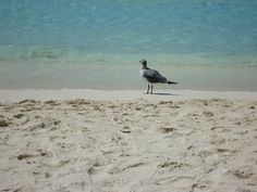 Seagull Playa Gaviota Azul, the nicest, safest beach in Cancun, just  in front of our condo