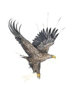"""""""Havørn"""" (Norwegian eagle) Copyright: Emmeselle.no illustration by Mona Stenseth Larsen Bald Eagle, Inspiration, Illustration, Kunst, Biblical Inspiration, Illustrations, Inspirational, Inhalation"""
