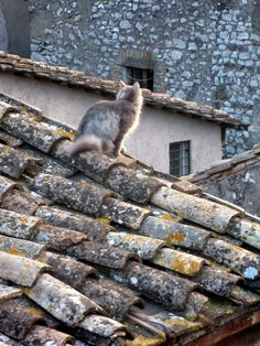 Cat on the Roof - Sant'Oreste, Rome Roof Sealant, Italian Interior Design, Medieval Houses, Cat Photography, Happy Animals, Crazy Cats, Pet Birds, Aesthetic Photo, Dog Cat