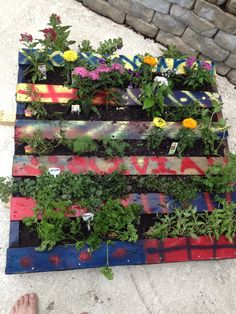 Vertical Garden - DONE.  Daughter painted the pallet, planted it today...hanging it next weekend.