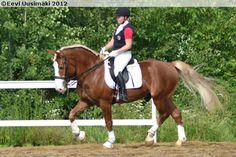 flaxen chestnut - Finnhorse stallion Veihaivei Jii