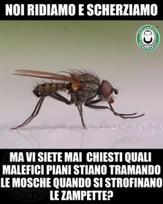 Piani di conquista globale. Funny Chat, Funny Jokes, Funny Images, Funny Photos, Thumbs Up Funny, Verona, Italian Memes, Serious Quotes, Funny Pins
