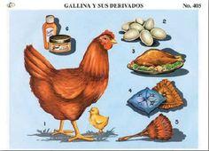 Cromo no. 6 405 – La Gallina y sus Derivados
