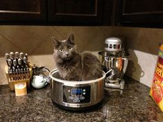 Cooking with Kitty