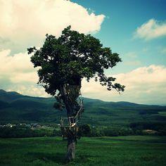 Tree House by dagochan*55, via Flickr