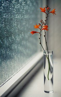 Vase on Window Sill with Orange Flowers Deco Floral, Arte Floral, Beautiful Flowers, Beautiful Pictures, Simply Beautiful, I Love Rain, Window Sill, Nature Wallpaper, Rainy Day Wallpaper