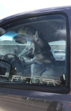 My dog Lincoln thought he would drive us home after his visit to the vet. http://ift.tt/2tSO9up