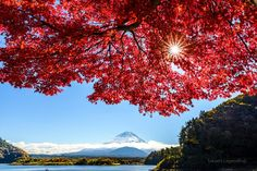 Red cap by Takashi on 500px
