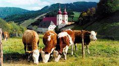 Urlaub im Kloster  Credit: klösterreich