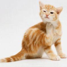 little kitty awwwww