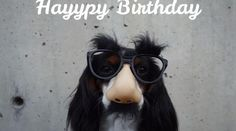 Happy Birthday Dog Meme A meme is mostly shared on social media platforms and nowadays a birthday message would not be complete. Happy Birthday Dog Gif, Happy Birthday Cousin Meme, Dog Birthday, Birthday Ideas, Funny Dog Memes, Good Hair Day, Dog Quotes, Cool Hairstyles, Marketing Videos