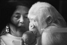 Snowflake The Albino Gorilla. Le 3 mars 1967 en Espagne, le gorille blanc albinos de 18 mois apprend à manger une orange avec l'épouse du docteur Luera, le directeur du zoo de la ville de Barcelone, chez elle, en blouse blanche assise sur un fauteuil. - ladies silk blouses, blouse flower, blouse pink *ad