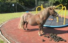 Pony tied to roundabout and abandoned finds new home. The Horse & Hound team are delighted that 'Mt Nibbles' has found a new home. Read more at http://www.horseandhound.co.uk/news/mr-nibbles-tied-roundabout-abandoned-playground-rehomed-474514#abzkqX8QDhiBZDAe.99