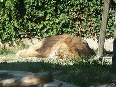 Parco Zoo Punta Verde, Lignano Sabbiadoro (Italy)