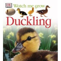 """The """"Watch Me Grow"""" series by DK Publishing shows different animals as they grow up in they natural environments. Make Way For Ducklings, Dk Publishing, Watch Me Grow, Primary Science, Nonfiction Books, Growing Up, Animals, Infants, Toddlers"""