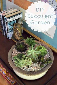 DIY Succulent Garden, the perfect indoor garden for a beginner
