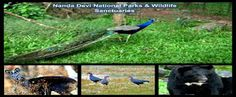 Uttarakhand posts: Nanda Devi National Park