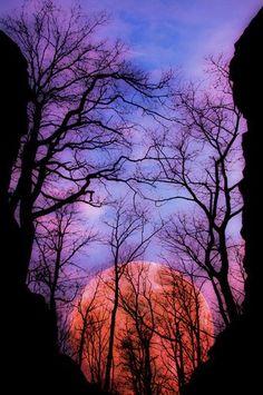 strawberry moonrise through bare trees
