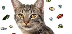 Good Feline Health- Seven secrets to choosing the best food for your cat
