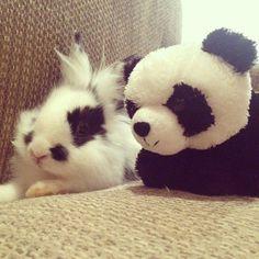 bun with his stuffed panda