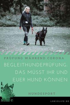 So verlief unsere #Begleithundeprüfung und diese Dinge müsst ihr und euer #Hund können.    #LokisLifeBlog #Hundesport Movie Posters, Movies, Tricks, Community, Board, Corona, Happy Animals, Companion Dog, Cat Food