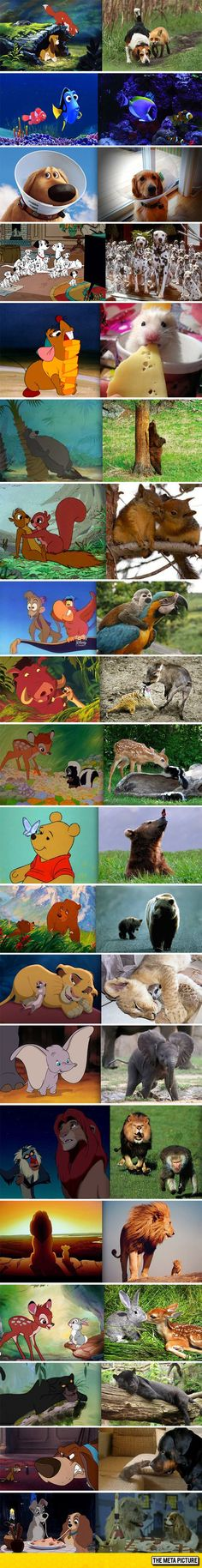 Classic Disney Movies In Real Life<<I just realized how unrealistic Doug from UP is.