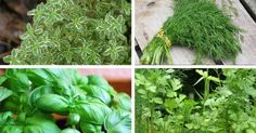 herbs to increase magnesium levels