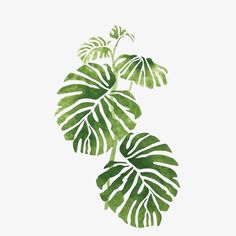66 ideas plants illustration art leaves for 2019 Art And Illustration, Watercolor Illustration, Illustration Botanique, Wall Murals, Wall Art, Wall Decor, Tropical Leaves, Palm Tree Leaves, Plant Leaves