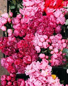 "548 Beğenme, 8 Yorum - Instagram'da Kelsea Olivia Gaynor (@eastolivia): ""Bunches of pink peonies to start the week """