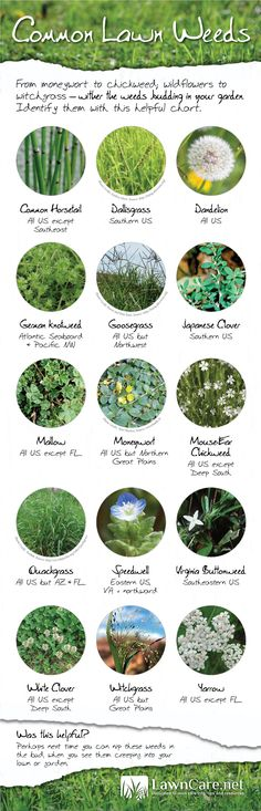 Find out what types of weeds are plaguing your lawn with this handy weed identification guide from LawnCare.net.