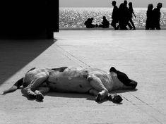 """Φωτογραφία της Λίας Εμμανουηλίδου από την έκθεση φωτογραφίας """"φαντάσου: ΕΛΛΑΔΑ""""  των σπουδαστών της Photoglobe Seminars. Dogs, Watermelon, Animals, Animales, Animaux, Pet Dogs, Doggies, Animal, Animais"""
