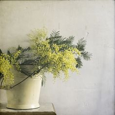 Mimosa, by Paul Grand