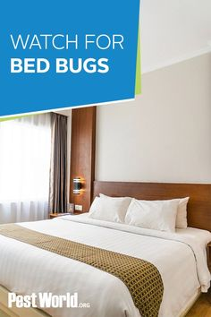 Bed bugs have been around for over 3,000 years and continue to plague travelers and homeowners alike. If you're planning on traveling in the near future, read up on how to avoid bringing this hitchhiking pest home with you. Second Hand Furniture, New Environment, Bed Bugs, Under Bed, Traveling, Indoor, Future, House, Home Decor