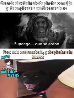 Hilarious memes and Pictures about Dogs bork Funny Dog Memes, Funny Dogs, Funny Animals, Hilarious Jokes, Latina Meme, Laughing Jokes, Pinterest Memes, Spanish Memes, Book Memes