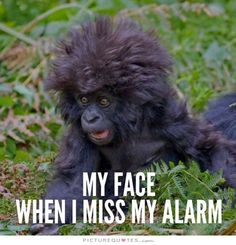My face when I miss my alarm. Picture Quotes.