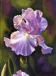 "Iris by Cathy Hillegas Watercolor ~ 14"" x 11"""