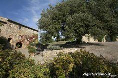 Agriturismo Villa Podernovo a Monticiano (Siena) - Toscana