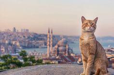 Cat in İstanbul.  (via Instagram - turkey_home)  #turkey #türkiye #istanbul #mosque #cami #kedi #cat #kitty #kitten