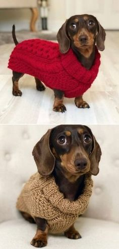 Adorable Knitted Dog Sweater Patterns To Try You're going to love these Knitted Dog Sweater Patterns and we've rounded up some of the cutest on the block. Check them out now and Pin your favorites. Knitted Dog Sweater Pattern, Dog Coat Pattern, Knit Dog Sweater, Dog Sweaters, Sweater Patterns, Diy Crochet Dog Sweater, Dachshund Sweater, Skirt Patterns, Coat Patterns