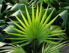 tropical leaves - Google Search