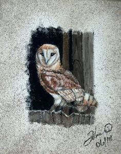 Barn Owl II (part of Toni B's Feathers Flight collection) 8X10 Acrylic Framed. $100 201477