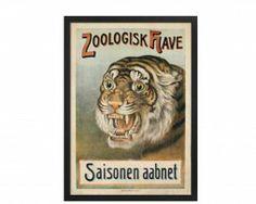 Zoo Tiger #plakatgalleridk