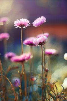bardzo nie lubię być przeziębiona. :pzwłaszcza o tej porze roku :)a zdjęcie wygrzebane z jakiegoś starego folderu :)
