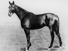 1899 Kentucky Derby winner, Manuel. click on this for gallery of Kentucky Derby Winners